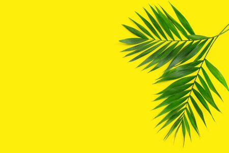 Minimal tropical green palm leaf on yellow  paper background.  Flat lay Top view with copy space for  your text. Stock fotó