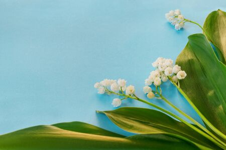 Beautiful white lilies of the valley with green leaves on blue background for invitation or congratulations . Flat lay, top view, copy space concept.
