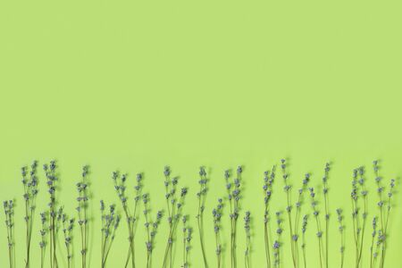 Branches of dry purple fragrant lavender on green paper background. Flat lay, top view, copy space concept.