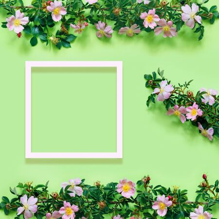 Beautiful rosehip branch on delicate green background. Flat lay, top view, copy space concept.