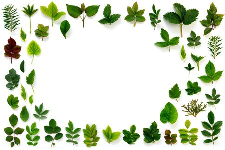 Pattern of various green leaves on  white isolated background. Flat lay, top view, copy space concept.  Stock Photo