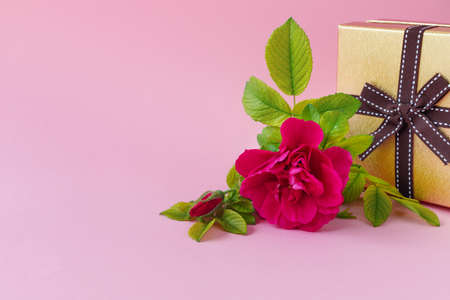 Beautiful pink rose with green foliage with golden gift box on delicate paper background. Birthday Greeting Card. With empty place for your text.