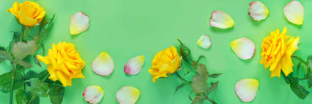 Bouquet of beautiful yellow roses and flower petals on green paper background. Congratulation or invitation to the holiday. Flat lay, top view, copy space concept