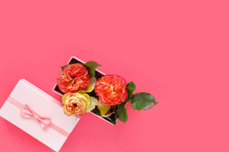 Bouquet of beautiful red roses in gift box on pink background. Copy space for text, invitation or congratulations. Flat lay, top view, copy space concept.