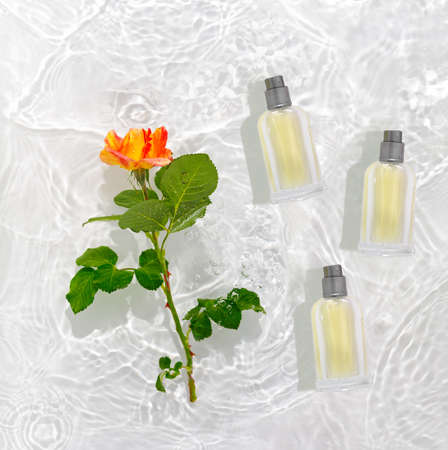 A bottle of perfume in pure waves of water. Flowers and delicate rose petals with drops. Flat lay, top view, copy space concept.