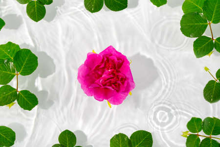Beautiful rose petals macro with drop floating on surface of the water close up. It can be used as background. Flat lay, top view, copy space concept. Foto de archivo