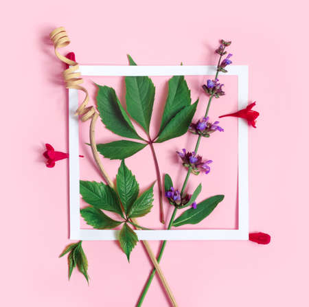 Sage branch and Weigela flowers with white paper frame on pink background. Flat lay, top view, copy space concept. Foto de archivo