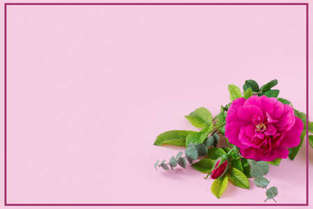 Beautiful pink rose with green eucalyptus and place for your text on delicate paper background. Mother's Day Greeting Card.