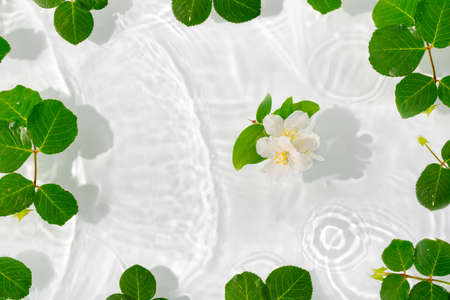 Beautiful jasmine petals macro with drop floating on surface of the water close up. It can be used as background. Flat lay, top view, copy space concept. Flat lay, top view, copy space concept. Foto de archivo - 155232934