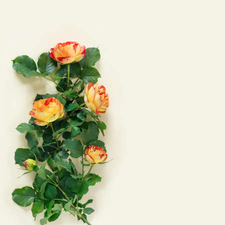 Beautiful orange rose on delicate yellow paper background. Flat lay, top view, copy space creative. Foto de archivo - 155114608