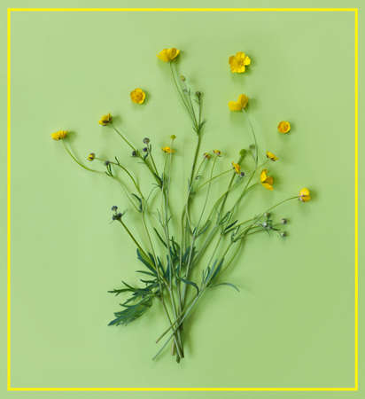 Beautiful delicate postcard with pattern of yellow buttercup flowers for holiday greeting or invitation. Flat lay, top view, copy space concept. Creative green trending background. Foto de archivo