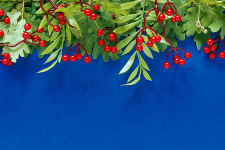 Autumn oak and rowan branches with red berries on blue background. Flat lay, top view, copy space concept. Creative paper trending background