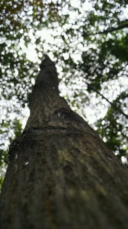 up: Close up of tree in park