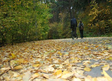 Autumn Scenic Road photo