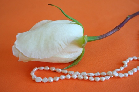Pearl beads with white rose on the orange background. photo