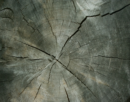 Cross section of the old tree trunk Stock Photo - 14007068