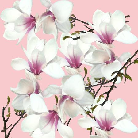 botanics: Orchids on a pink background