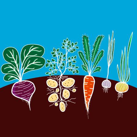 成長する野菜 - ビート、ジャガイモ、ニンジン、ニンニク、タマネギとイラスト