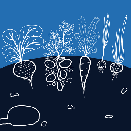 plant seed: Illustration with Growing Vegetables - Potato, Carrot, Garlic, Beetroot, and Onion on the Black Background