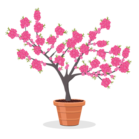 Dwarf fruit tree growing in the flower pot. Small Peach tree in bloom. Growing peaches in a container. Isolated on white. Garden illustration. Japanese momo tree.