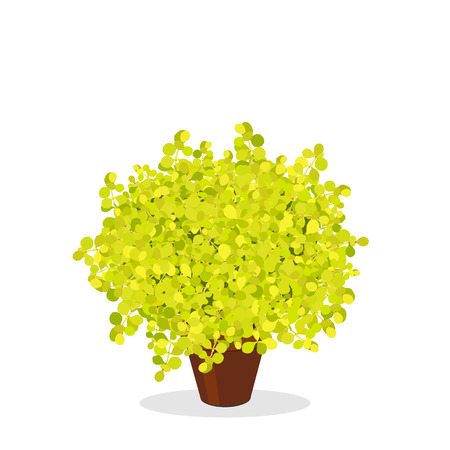 Lime Glow Japanese Barberry trimmed into a ball shape. Decorative foundation plant. Bright green bush growing in the flower pot. Garden illustration. Growing shrubs in a container. Isolated on white.
