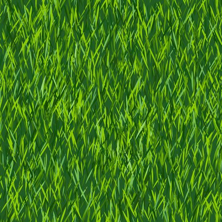 Green grass texture or background. Seamless pattern. Spring lawn texture. New grass background. 矢量图像