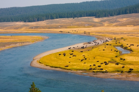 Bison paradise in Yellowstone National Park,USA photo