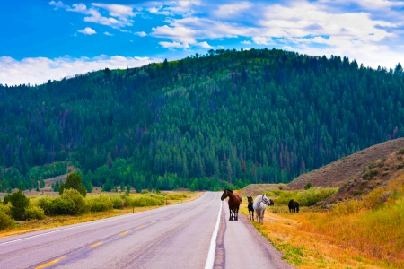 Horses enjoy the peace in Yellowstone National Park,USA photo