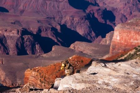 Enjoy the desert in Grand Canyon National Park,Arizona photo