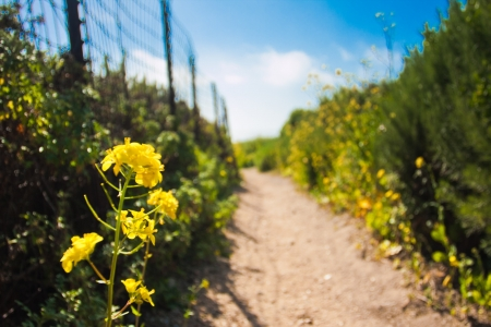 yellow wildflowers: Wildflowers blooming Stock Photo