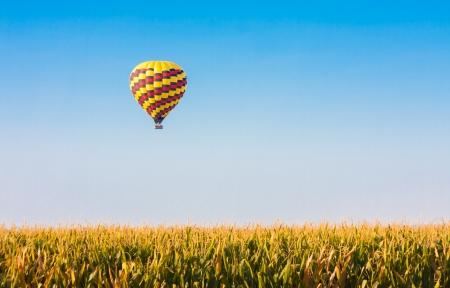 Heißluftballon fliegen über Maisfelder gegen den blauen Himmel Standard-Bild - 21167025