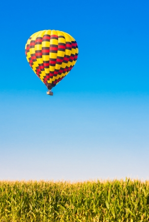 Hot air balloon flying over corn fields against blue sky