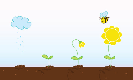 seedling growing: Flower growing stages. Process of growing plant in four stages. Vector Illustration. Illustration