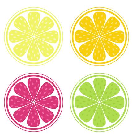 lemon lime: Fette di agrumi isolati su sfondo bianco (limone, calce, arancia, pompelmo). Limone, calce, arancione e rosso pompelmo isolato su sfondo bianco. Stilizzato illustrazione vettoriale di frutta fresca.