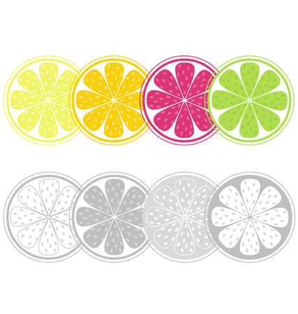 citric: Citrus fruit slices in retro style isolated on white. Stylized vector citrus slices set isolated on white background. Color and black&white version. Illustration