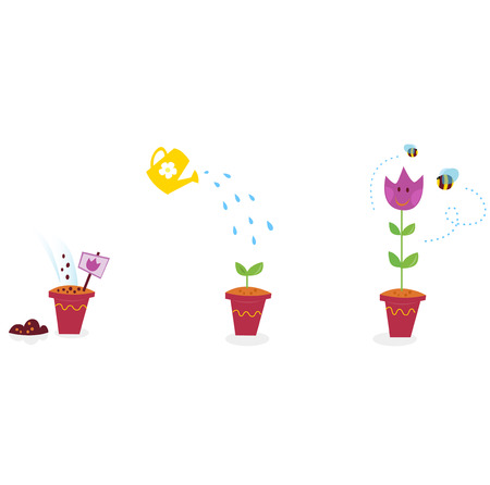 seedling growing: Garden flowers growth stages - tulip. The growing process of tulip in three stages.  Illustration. Illustration