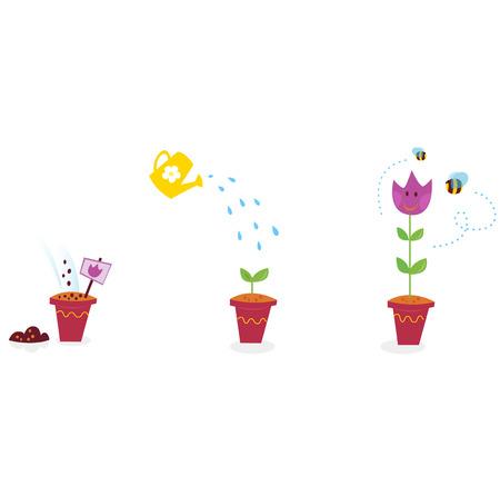 etapas de vida: Jard�n de flores las etapas de crecimiento - tulip�n. El creciente proceso de tulip�n en tres etapas. Ilustraci�n.