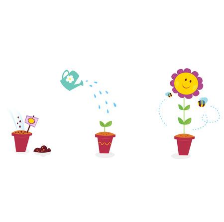 Fiore giardino crescita fasi - girasole. Il processo di crescita di girasole in tre fasi.  Illustrazione.