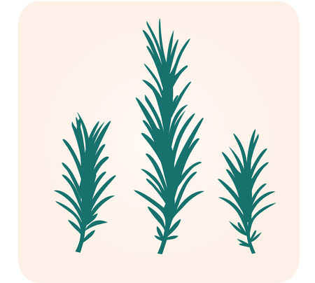Rosemary herb silhouette.  Vector