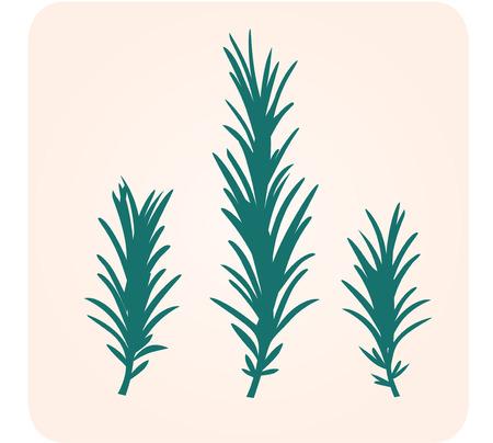 Silueta de hierba de Rosemary.  Ilustración de vector