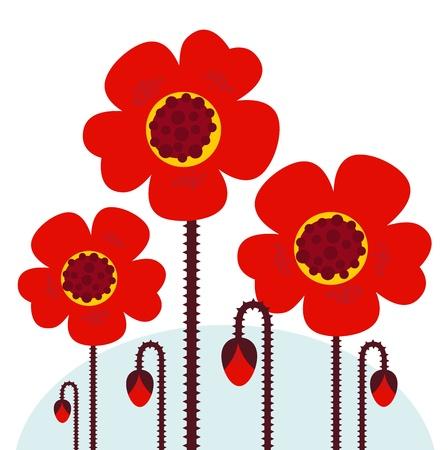 remembrance day: Raccolta di papaveri rosso isolato su sfondo bianco