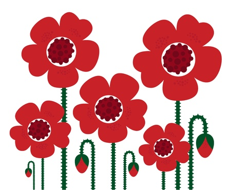 Collection of dark red Poppies isolated on white background.  Vector