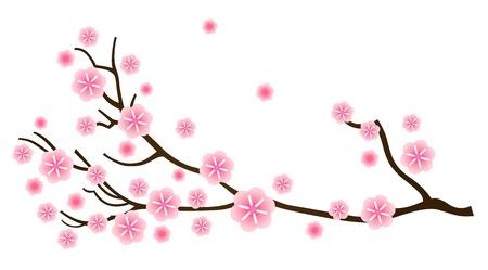 ciruela: Cerezos en flor, detalle de la rama de cerezo. Vector