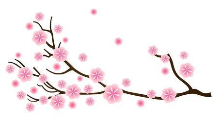 cherry blossom tree: Cherry blossom, detail of sakura branch. Vector Illustration