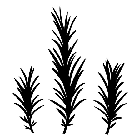herb garden: Rosemary spice herbs. Illustration.