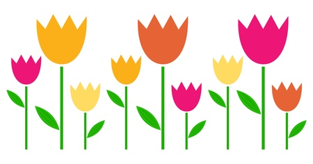 Fresh cute colorful Tulips isolated on white.  Vector