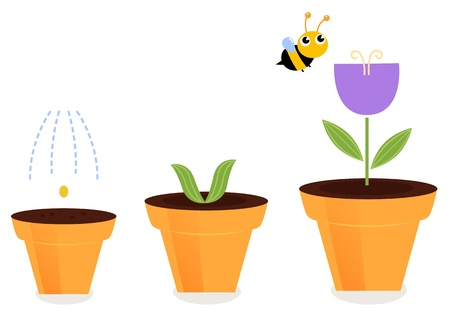 life stages: Purple spring flower growth. Vector cartoon Illustration