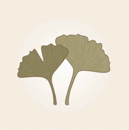 botanist: Hand - drawn Gingko herbs on old paper. Vector Illustration Illustration