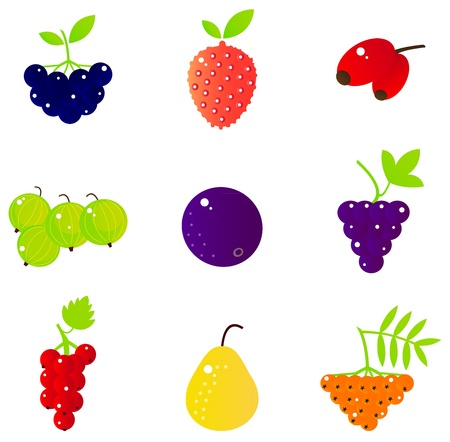 Berries and exotic fruit collection. Vector Illustration