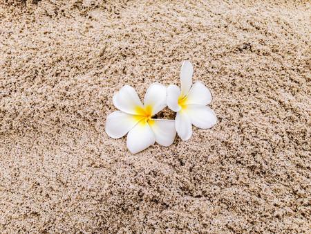 Tiaré flowers on the sand